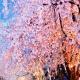 Spring Aromas - AudioJungle Item for Sale