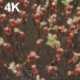 The Grape Seedlings - VideoHive Item for Sale