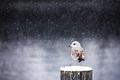 Winter silence - PhotoDune Item for Sale