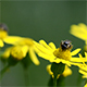 Insects On A Flower - VideoHive Item for Sale
