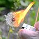 Ignite Dandelion - VideoHive Item for Sale