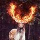 Fire Photoshop Action - GraphicRiver Item for Sale