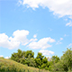 Clouds Over Trees - VideoHive Item for Sale