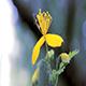 Flower Celandine in Poplar Pooh - VideoHive Item for Sale