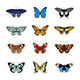 Set of Realistc Butterfly Icons - GraphicRiver Item for Sale