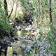 Small Stream Flowing Over Rocks Through Trees - VideoHive Item for Sale