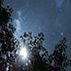 Sun Poplar Fluff Leaves Sky - VideoHive Item for Sale