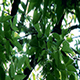 Sun Rays Through Tree Leaves - VideoHive Item for Sale