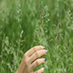 Woman Hands Stroking Grass - VideoHive Item for Sale