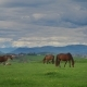 Horses On Green Grass In The Background Of The Mountain Landscape - VideoHive Item for Sale