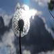 Dandelion Fluffy Sky - VideoHive Item for Sale