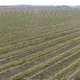 Aerial  Sown Field on a Sunny Day - VideoHive Item for Sale