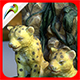 Vine Cheetahs - 3DOcean Item for Sale