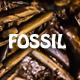Prehistoric Fossil Background 3D - 3DOcean Item for Sale