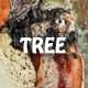 Tree Bark Texture 4 3D - 3DOcean Item for Sale