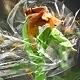 Plastic Wrap Photoshop Action - GraphicRiver Item for Sale
