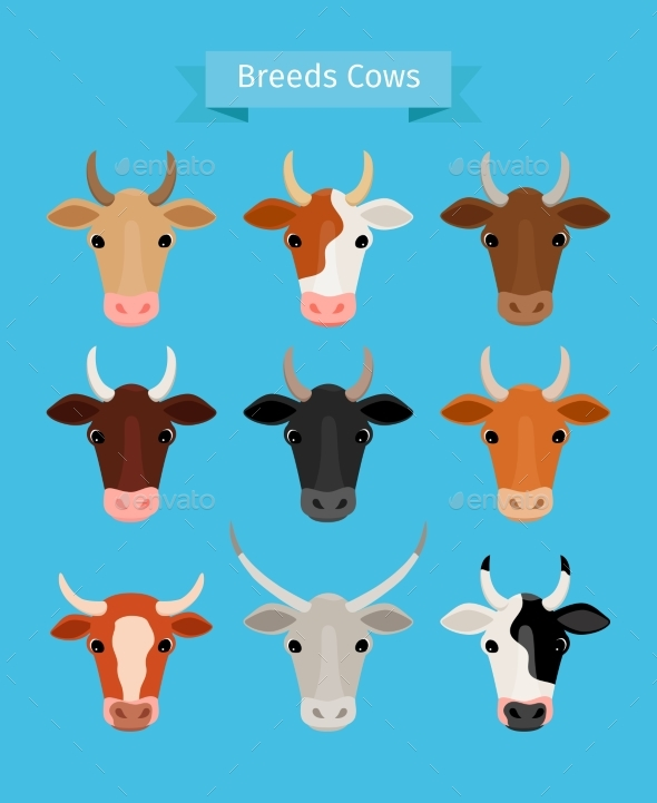 Cow Heads Vector Set