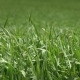 Wind Moving The Green Grass  - VideoHive Item for Sale