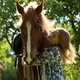 Girl Hugging a Horse - VideoHive Item for Sale