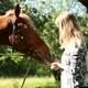 Girl Feeding Horse Apples - VideoHive Item for Sale