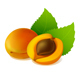 Apricot with Leaves - GraphicRiver Item for Sale