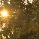 Sun Shining Through The Leaves - VideoHive Item for Sale