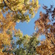 Autumn Leaves Against Blue Sky Wide - VideoHive Item for Sale