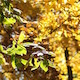 Autumn Leaves Green & Yellow Light Breeze - VideoHive Item for Sale