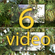 The Shoots of Pine Tree - VideoHive Item for Sale