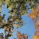 Autumn Trees Against Blue Sky Light Breeze - VideoHive Item for Sale