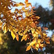 Yellow Autumn Leaves in the Wind - VideoHive Item for Sale