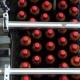 The Conveyor Belt Production Of Beer In PET Plastic Bottles. - VideoHive Item for Sale