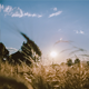 Wheat in the Wind 3 - VideoHive Item for Sale