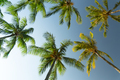 Sunny sky with palm trees - PhotoDune Item for Sale