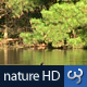 Nature HD | Ducks in Lake - VideoHive Item for Sale