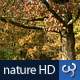 Nature HD | Autumn Fall Tree & Leaves I - VideoHive Item for Sale