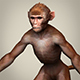 Game Ready Realistic Monkey - 3DOcean Item for Sale