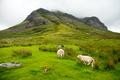 sheep grazing in the amazing landscapeof Scotland, under huge mountain - PhotoDune Item for Sale
