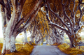 majestic tree alley - PhotoDune Item for Sale