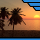 Palms at Sunset - VideoHive Item for Sale