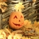 Halloween Pumpkin Lies On a Pile Of Leaves - VideoHive Item for Sale