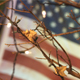 American Flag With Leaves - VideoHive Item for Sale
