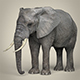 Realistic Asian Elephant - 3DOcean Item for Sale