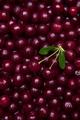 Top view of fresh organic cherries berries - PhotoDune Item for Sale