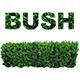 Bush Step - AudioJungle Item for Sale