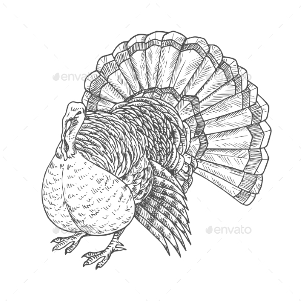 Thanksgiving Turkey Sketch Isolated Icon