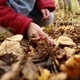 Girl Picking Mushrooms in the Forest - VideoHive Item for Sale