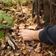 A Man Picking Mushrooms in the Forest - VideoHive Item for Sale