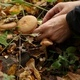 Man Picking Mushrooms in the Forest - VideoHive Item for Sale