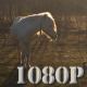 Horse Grazing in Sunset 2 - VideoHive Item for Sale